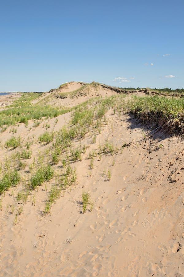 Grandes dunes de sable photographie stock libre de droits
