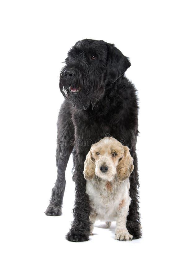 Grandes e cães pequenos bonitos foto de stock