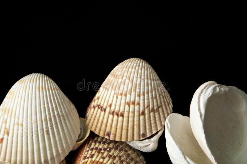 Grandes escudos do mar no fundo escuro imagem de stock