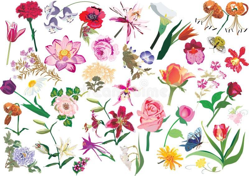 Grandes flores da cor ajustadas ilustração do vetor