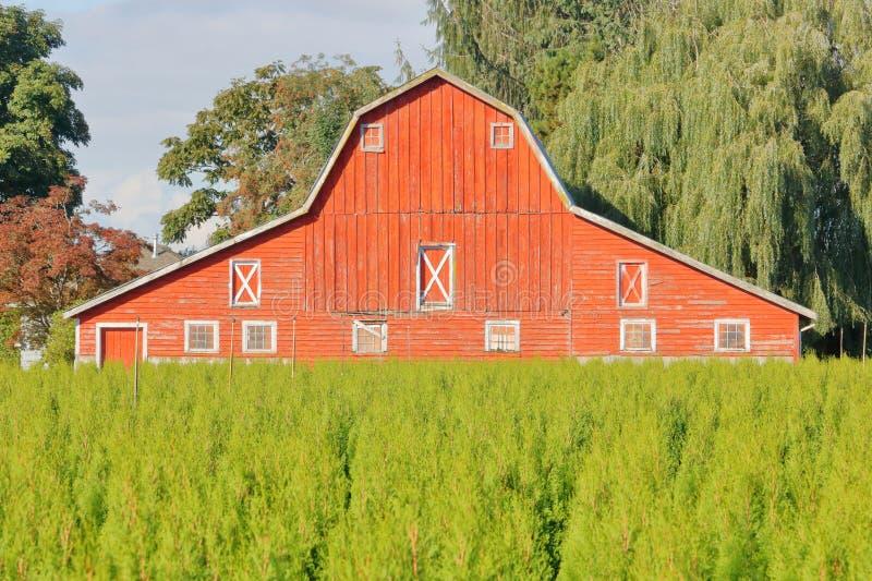 Grandes grange et ferme d'arbre rouges images libres de droits