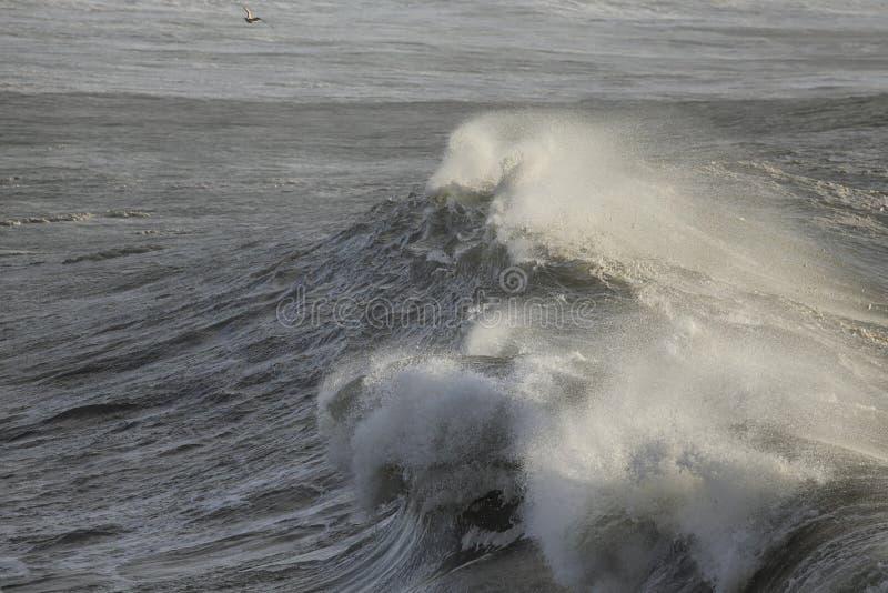 Grandes ondes d'océan photographie stock