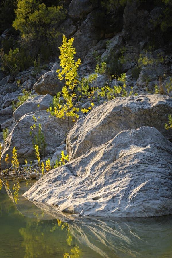 Grandes pedras e uma árvore pequena no banco de rio fotos de stock royalty free