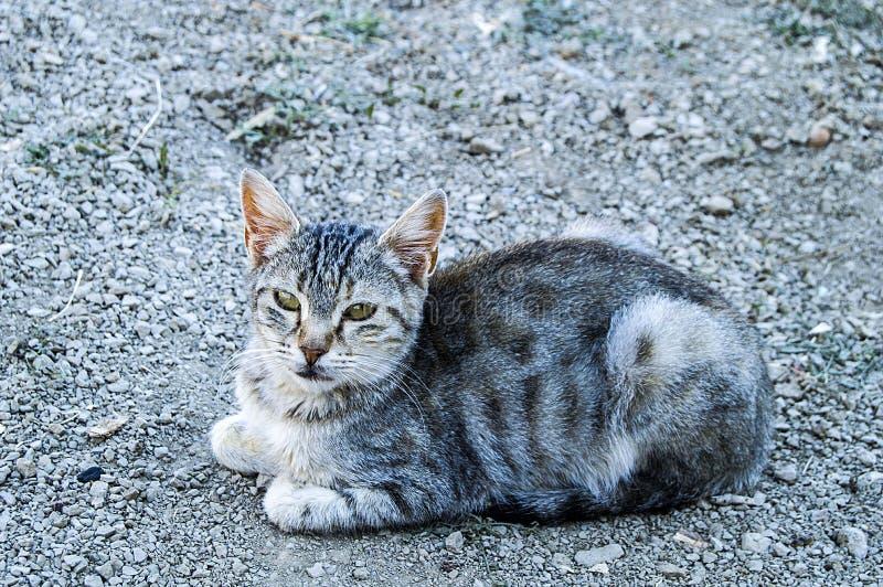 Grandes photos de chat de yeux, grands chats égarés, plots réflectorisés le plus beau chats écoutés, les plots réflectorisés les  images libres de droits