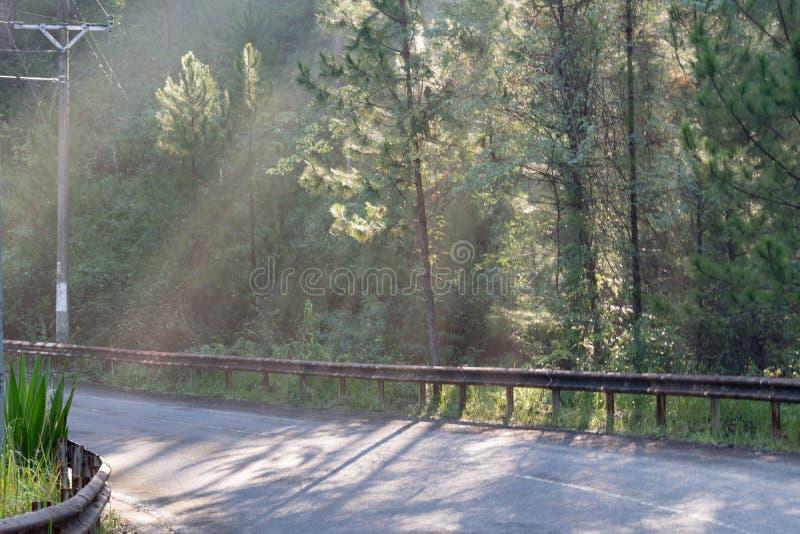 Grandes rayos solares en el bosque del pino con la magia de la luz, de la niebla y de la sol en la parte 5 de la salida del sol foto de archivo libre de regalías