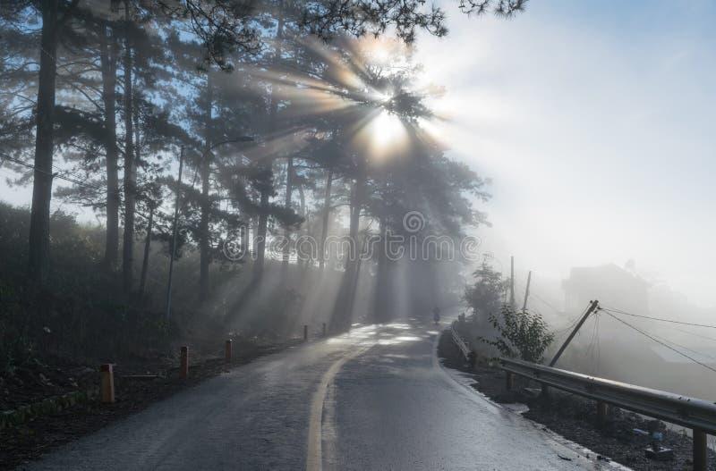 Grandes rayos solares en el bosque del pino con la magia de la luz, de la niebla y de la sol en la parte 9 de la salida del sol imagen de archivo libre de regalías