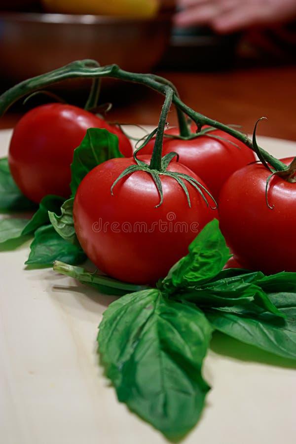 Grandes tomates rouge foncé sur une vigne verte sur une table en bois légère photo libre de droits