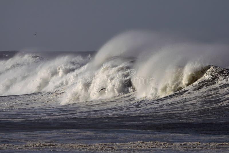 Grandes vagues photo stock