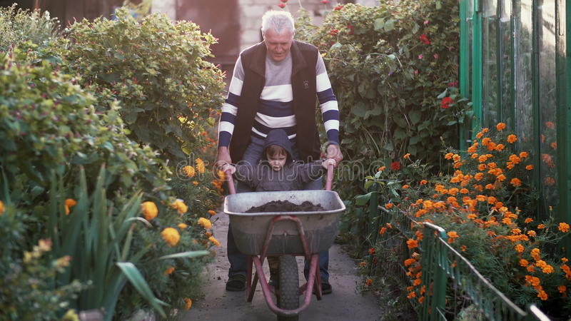Grandfather with grand son working in the garden riding the wheelbarrow. Old man helping little boy outdoor. 4K stock photo