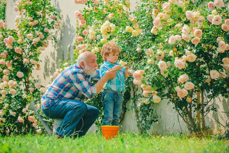 Grandfather and grandson. Old and Young. Concept of a retirement age. Gardening activity with little kid and family stock image