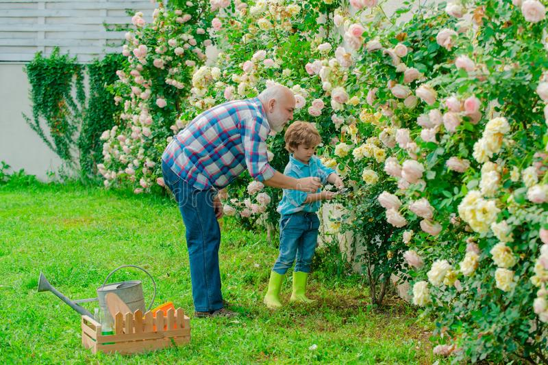 Grandfather and grandson. Old and Young. Concept of a retirement age. Spring and hobbies. A grandfather and a toddler. Are working in flowers park stock image