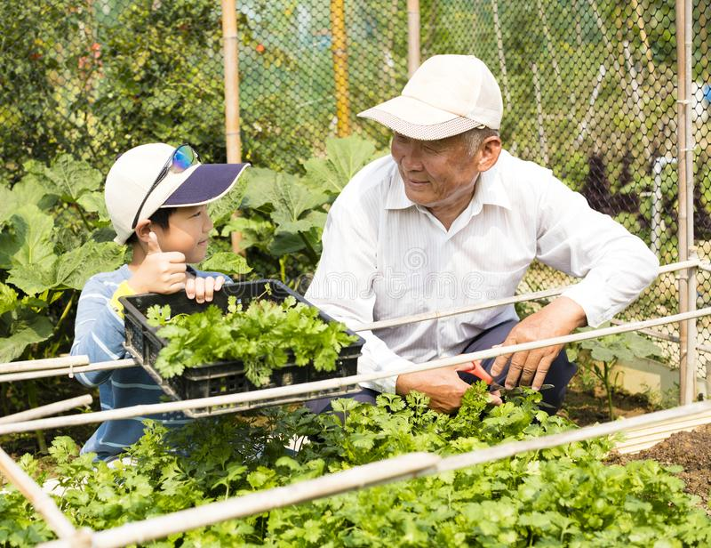 Grandfather and grandson working in the garden stock photo