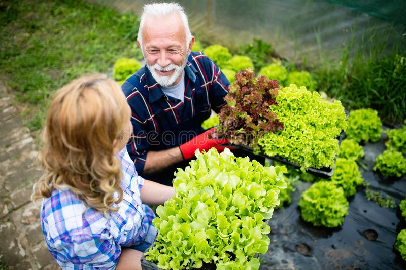Grandfather growing organic vegetables with grandchildren and family at farm royalty free stock photo