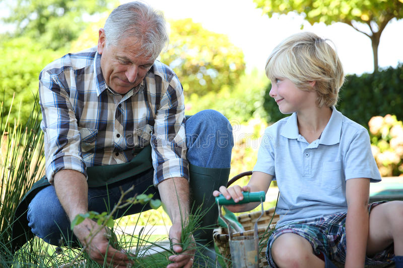 Grandfather and his grandson gardening stock photos