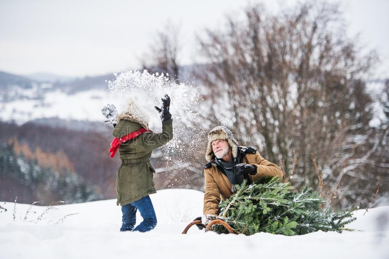 Grandfather and small girl getting a Christmas tree in forest, having fun. royalty free stock images