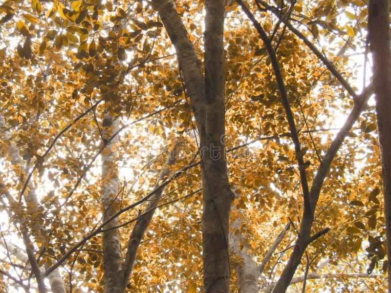 Grandi alberi con le foglie ed i rami che la luce solare splende nella foresta fotografie stock