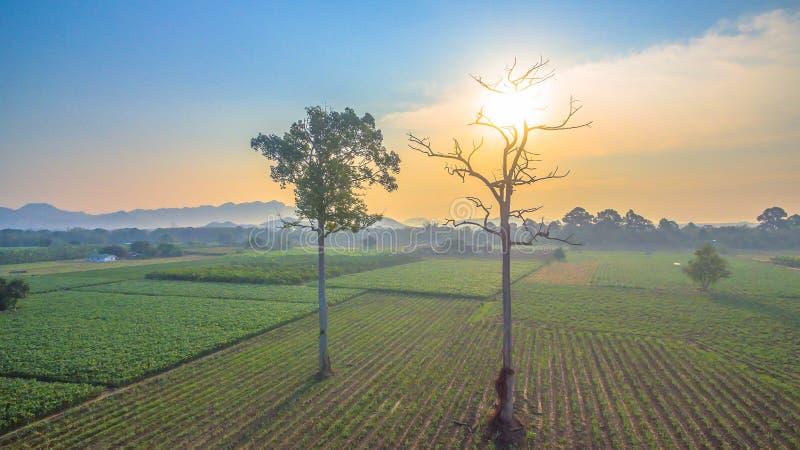 grandi alberi nei campi verdi fotografia stock libera da diritti