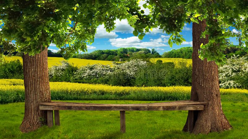 Grandi alberi nel campo, un banco, una vista della natura immagini stock