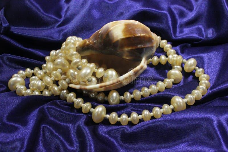 Grandi conchiglia e collana dalle perle bianche rotonde su un fondo blu immagini stock libere da diritti