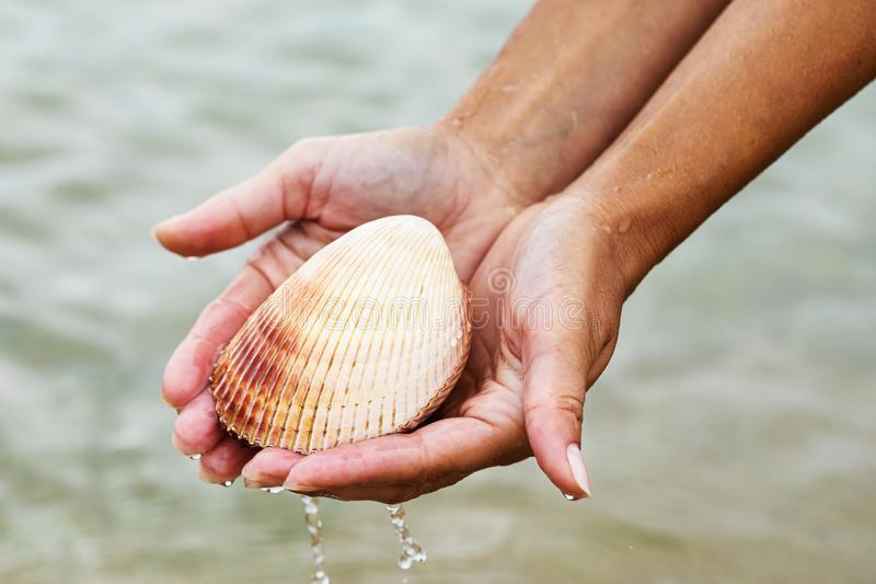Grandi conchiglie di mare bivalve in mano Abitanti del mare immagini stock libere da diritti