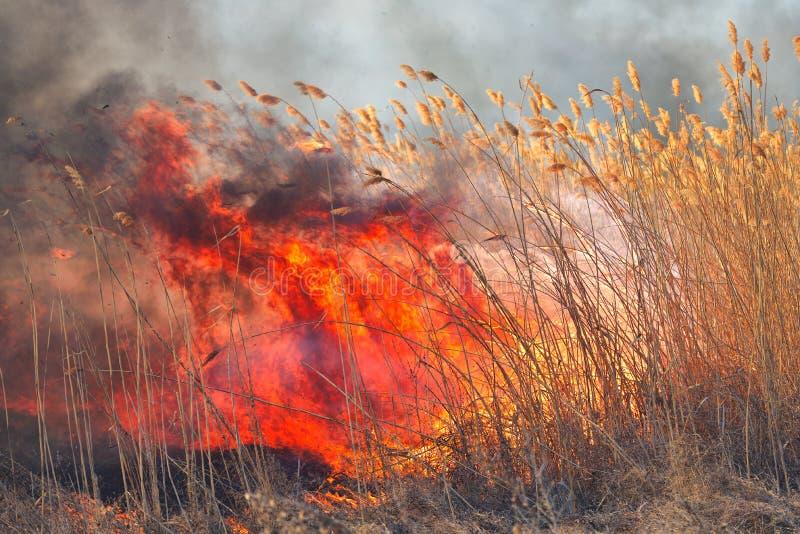 Grandi fiamme sul campo durante il fuoco Disastro accidentale fotografia stock libera da diritti