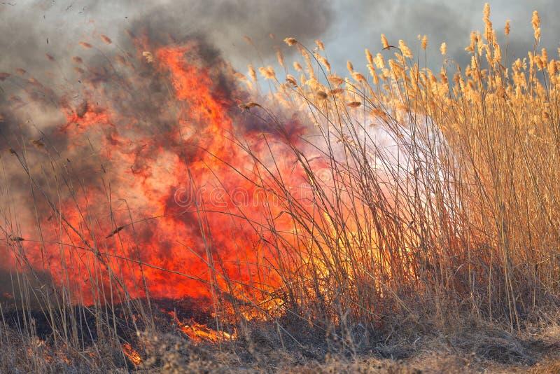 Grandi fiamme sul campo durante il fuoco Disastro accidentale immagine stock libera da diritti
