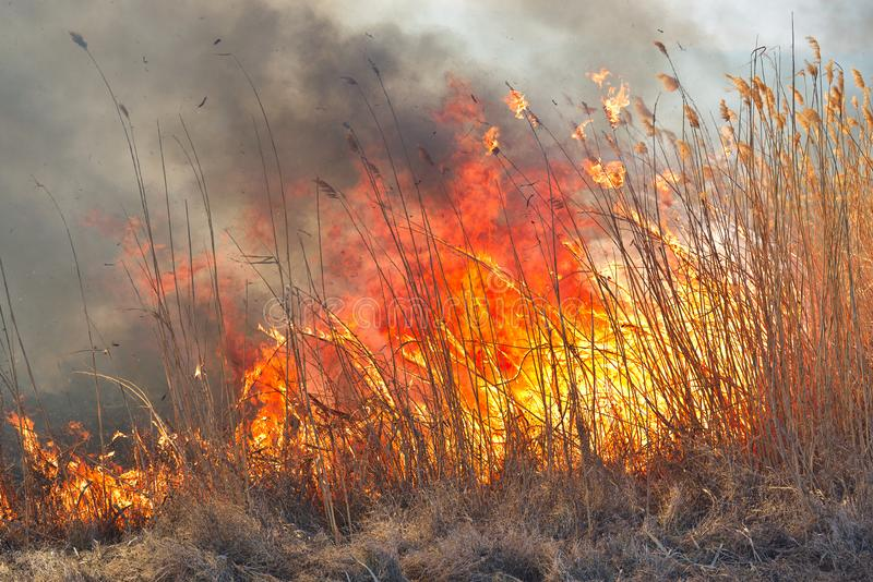 Grandi fiamme sul campo durante il fuoco Disastro accidentale immagini stock libere da diritti