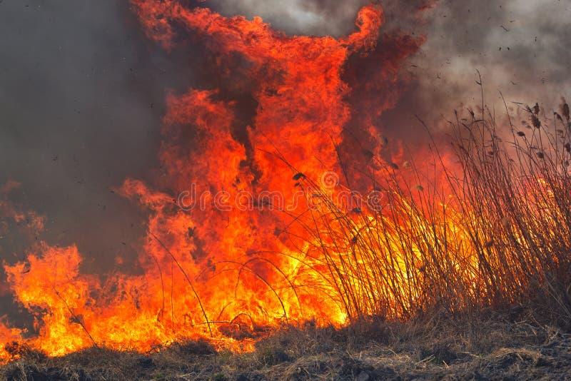 Grandi fiamme sul campo durante il fuoco Disastro accidentale immagine stock