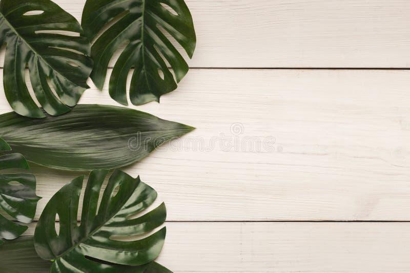 Grandi foglie su fondo bianco, vista superiore immagini stock libere da diritti