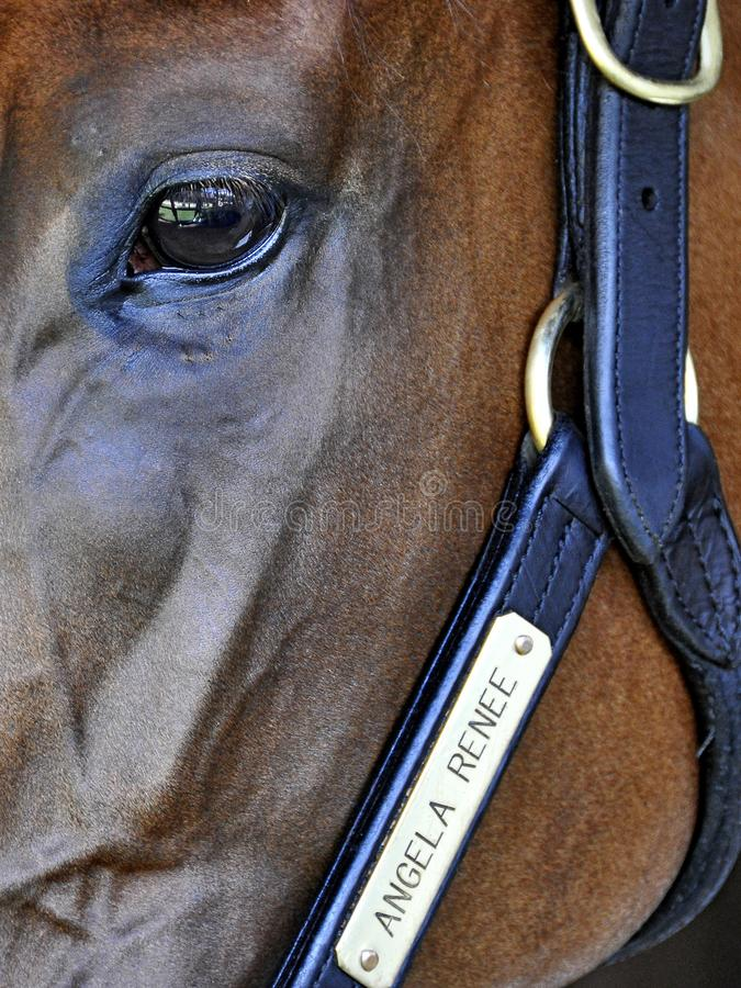 Grandi foto di corsa di cavalli da Fleetphoto fotografia stock libera da diritti
