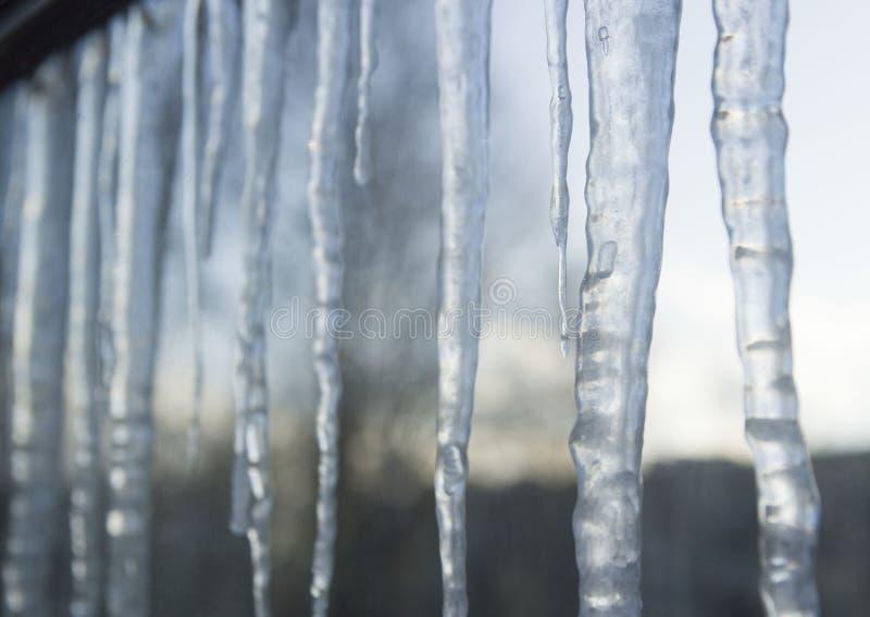 Grandi ghiaccioli che appendono sul tetto sopra una finestra in inverno o primavera Tetto di una costruzione coperta di grandi gh fotografia stock libera da diritti