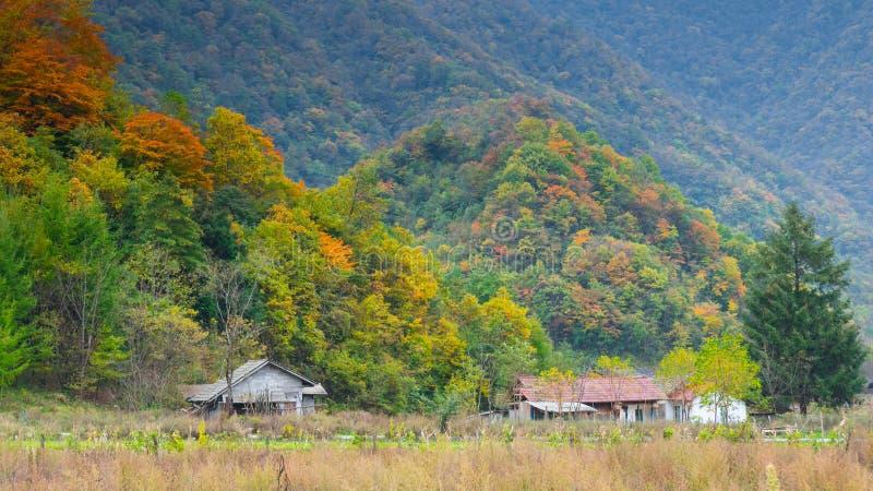 Grandi nove laghi della foresta di Hubei Shennongjia fotografia stock libera da diritti