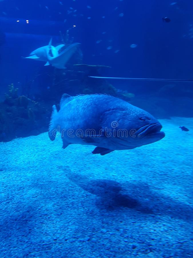 Grandi pesci fotografie stock libere da diritti