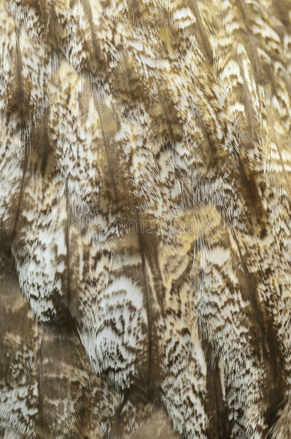 Grandi piume di Grey Owl fotografia stock libera da diritti