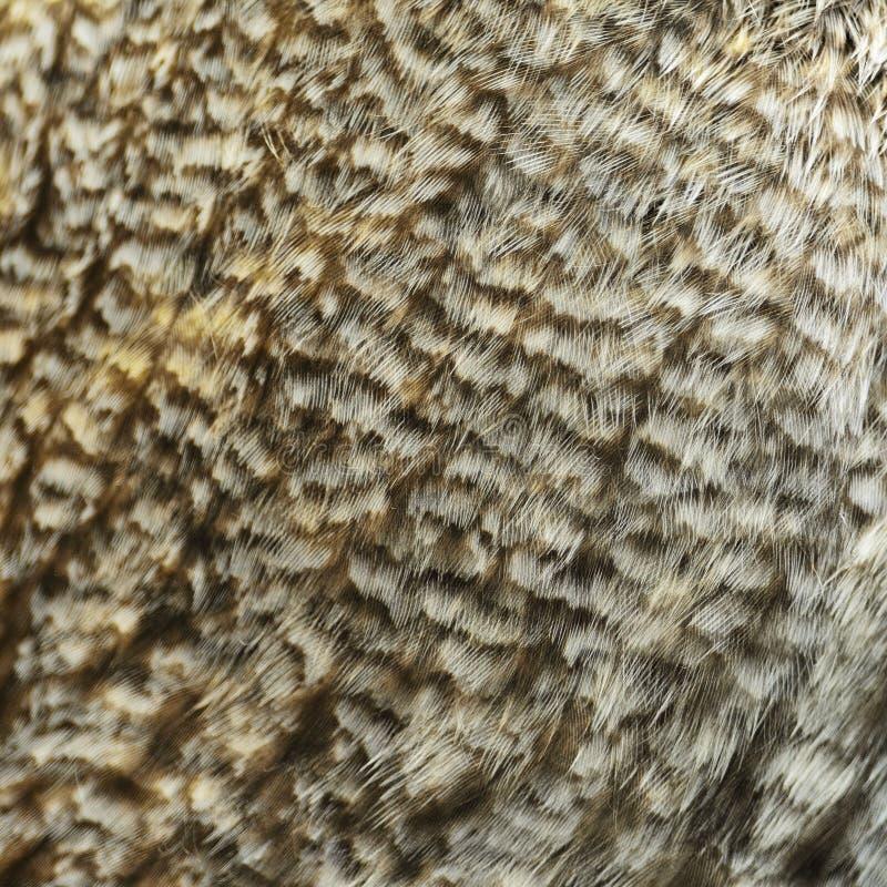 Grandi piume di Grey Owl fotografia stock