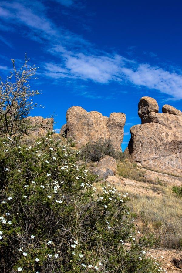 Grandi rocce e piante del deserto alla città del parco di stato delle rocce fotografie stock libere da diritti