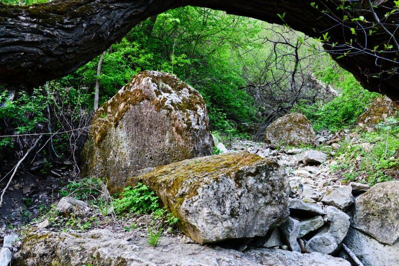 Grandi rocce nel legno fotografia stock