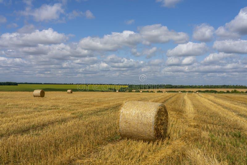 Grandi rotoli della bugia della paglia sul giacimento di grano raccolto contro lo sfondo del cielo blu soleggiato fotografie stock libere da diritti