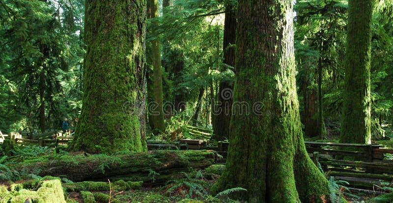 Grandi vecchi alberi fotografie stock libere da diritti