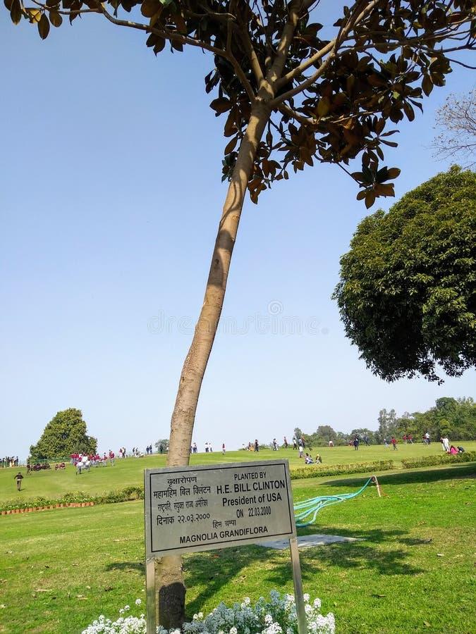 Grandiflora Mangolia засаженное Биллом Клинтоном на Rajghat, Нью-Дели стоковая фотография