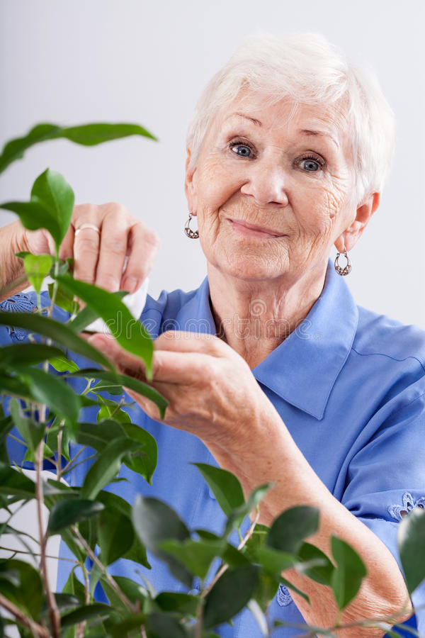 Grandma caring for a plant. A grandma taking care of a leafy plant stock photography