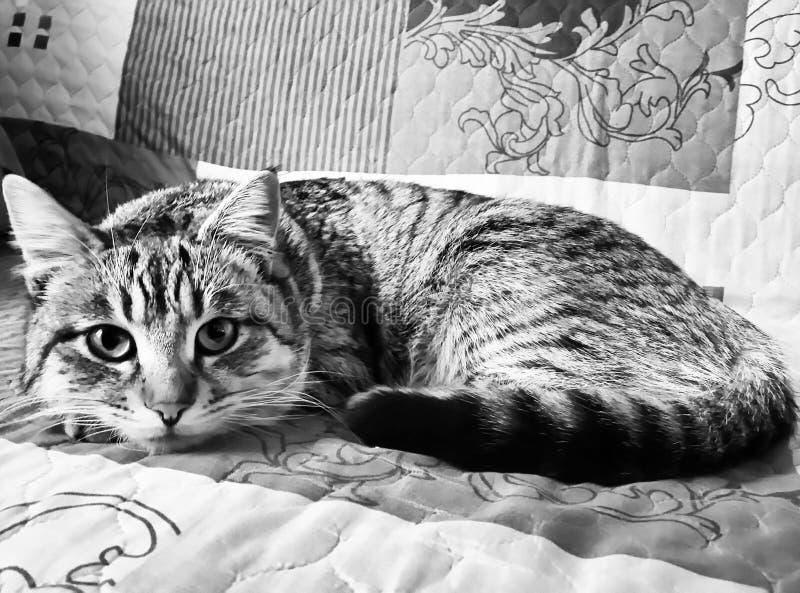 Grandma& x27 ; chat de s photographie stock libre de droits