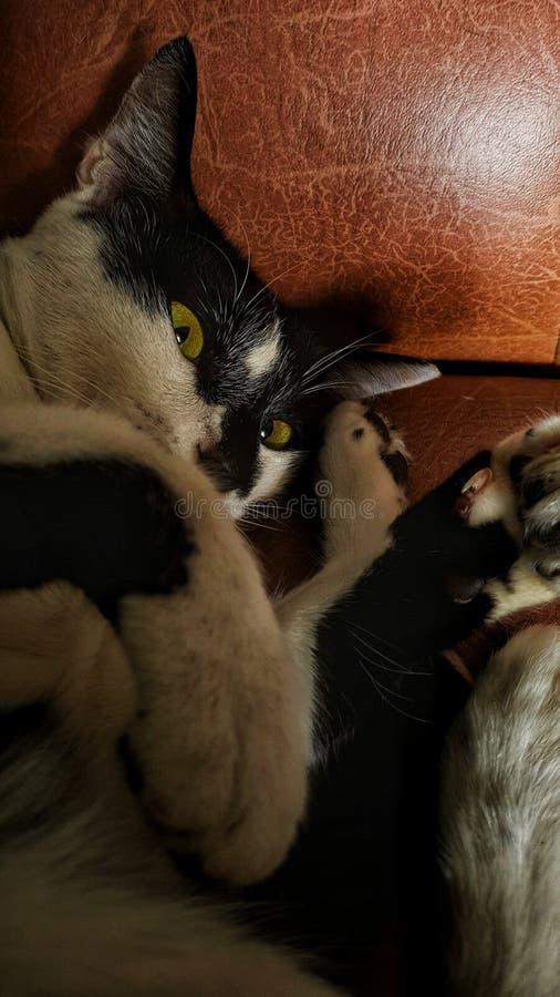 Grandma Creepy and Grumpy Cat royalty free stock photos
