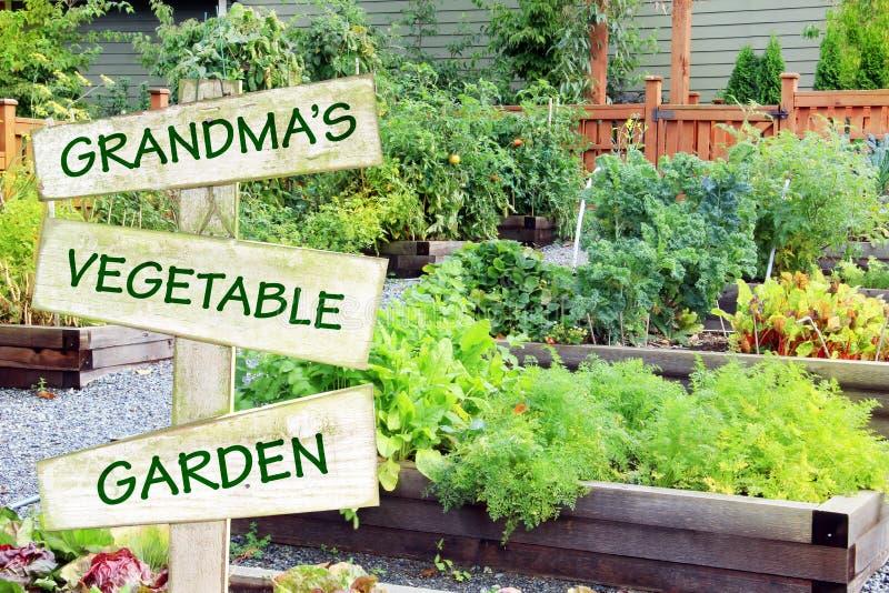 Grandma`s vegetable garden. royalty free stock photo
