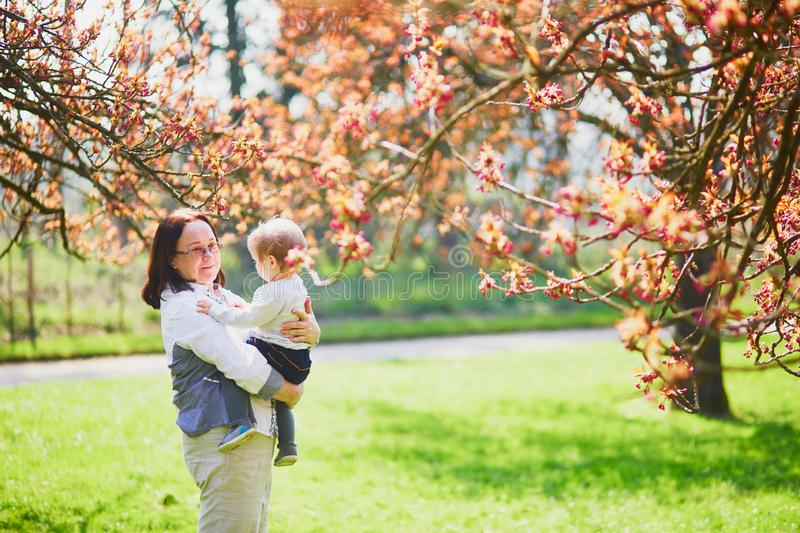 Grandmother and granddaughter enjoying cherry blossom season. Middle aged women holding 1 year old baby girl in park on a spring day. Grandmother and stock photos
