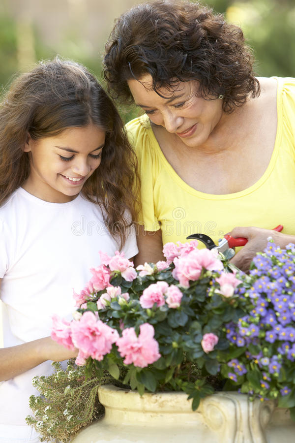Download Grandmother And Granddaughter Gardening Together Stock Image - Image: 12405757