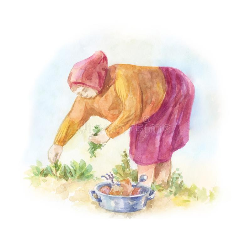 Grandmother in the headscarf bent over the bed planting the seed. Lings. Watercolor summer sketch royalty free illustration