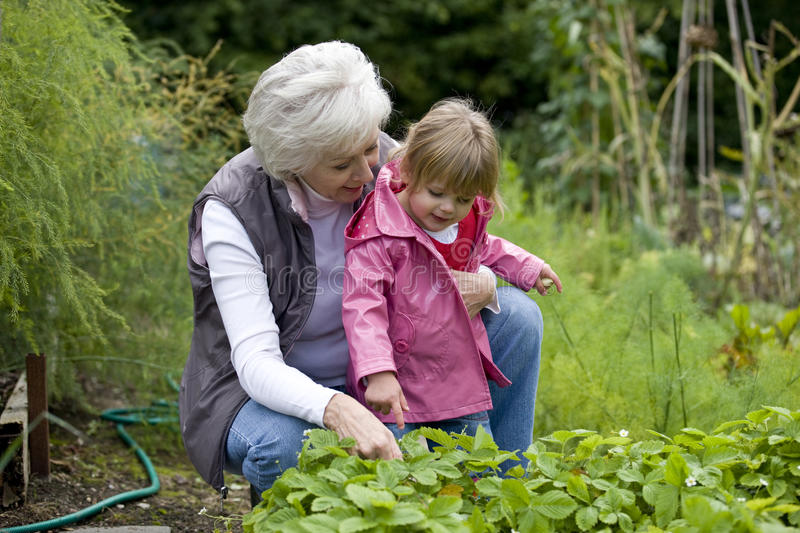 A grandmother and her granddaughter looking at strawberry plants stock images