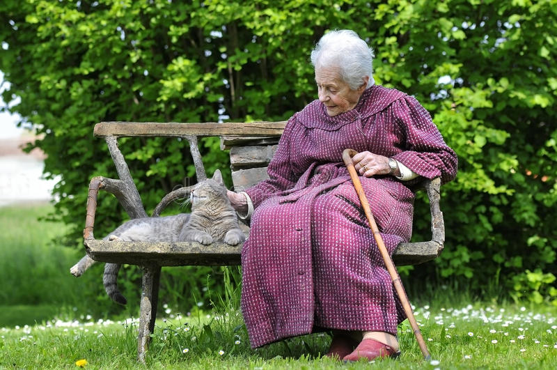 Grandmother and her pet. An old woman is relaxing in the park with her cat royalty free stock photography