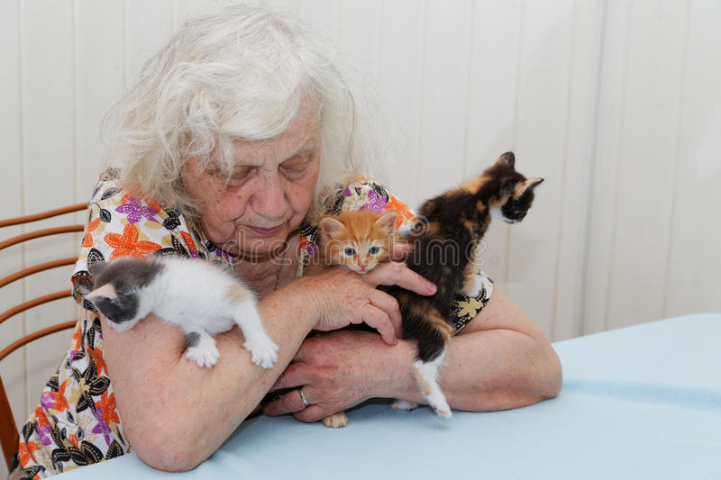The grandmother holding kittens stock photos